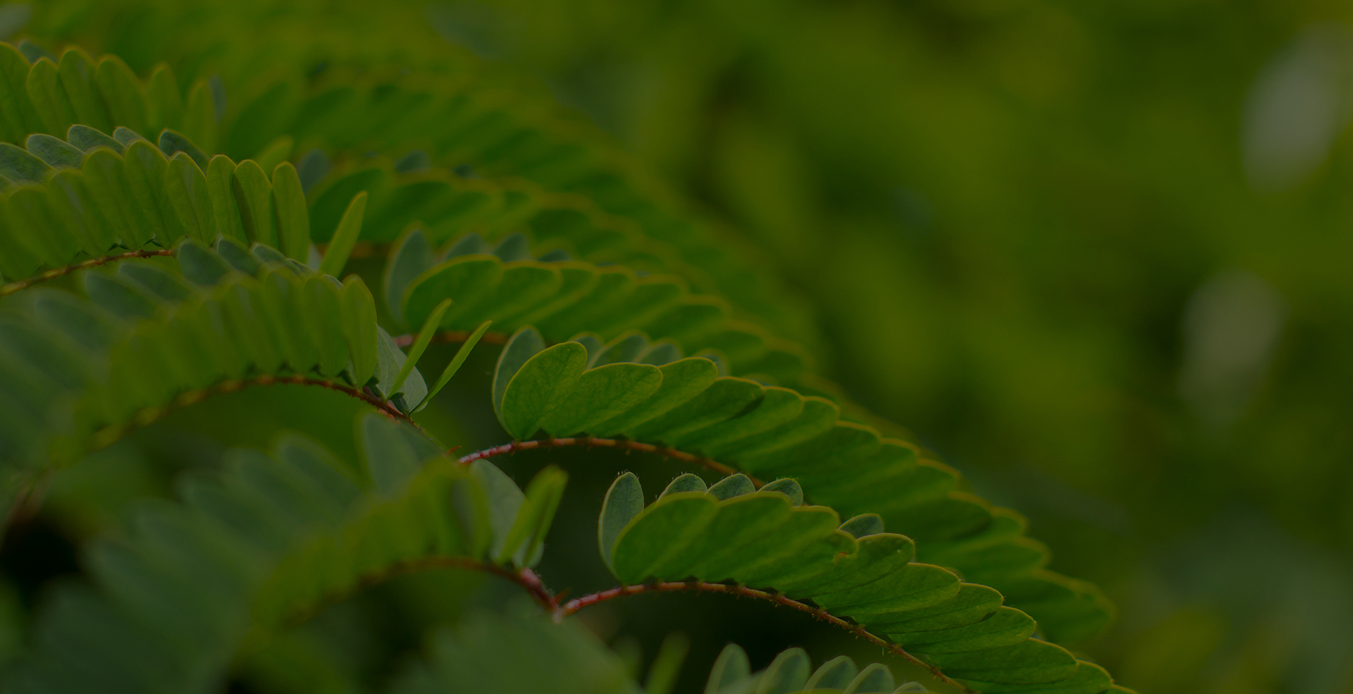 Help Reforest Hawai'i